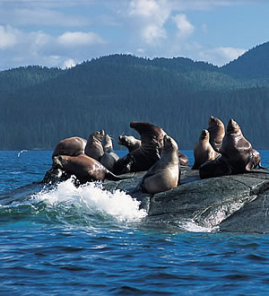 Otaries – Colombie-Britannique – Canada © Tourism British Columbia
