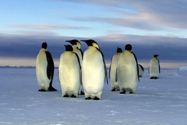 Voyage Odyssée antarctique
