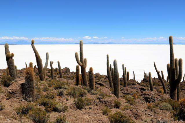 Voyage Du désert d'Atacama au salar d'Uyuni
