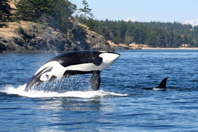 Voyage Découverte de l'île de Vancouver