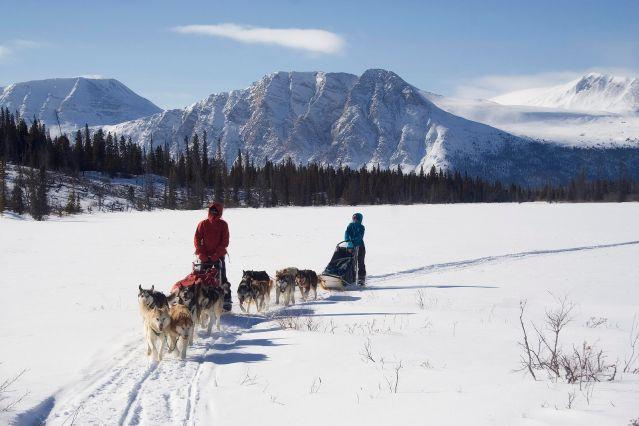 Chiens de traineau dans le Yukon - Canada