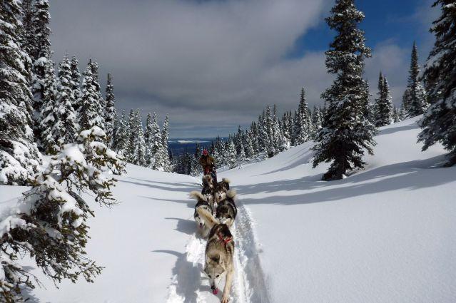 Traîneau à chiens - Canada