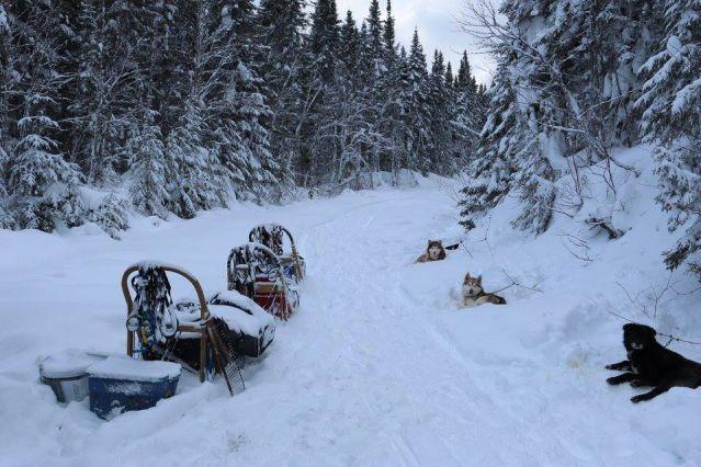 Raid en traîneau à chiens - Québec - Canada