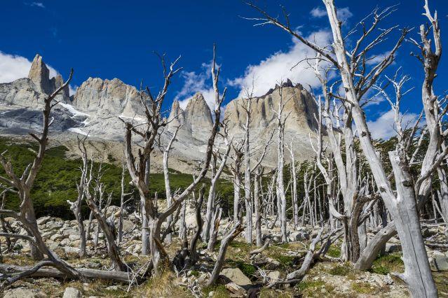 Valle del Francés - Parc national Torres del Paine - Patagonie - Chili