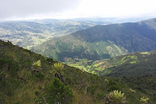 Trek entre forêt tropicale et paramo andin
