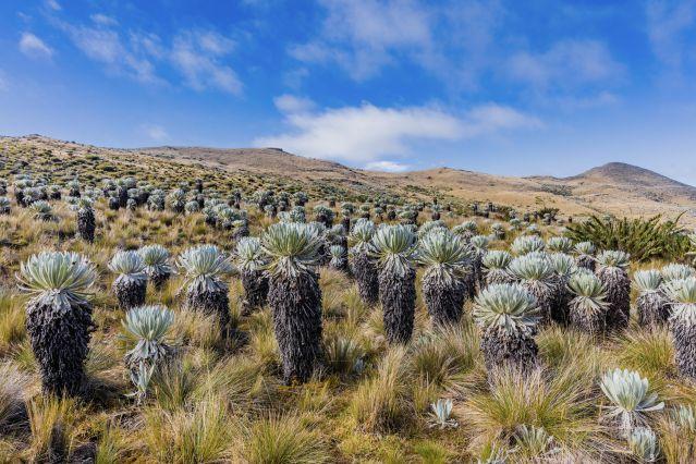 Voyage Trek entre forêt tropicale et paramo andin