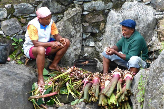 Culture - Santo Antao - Cap-Vert