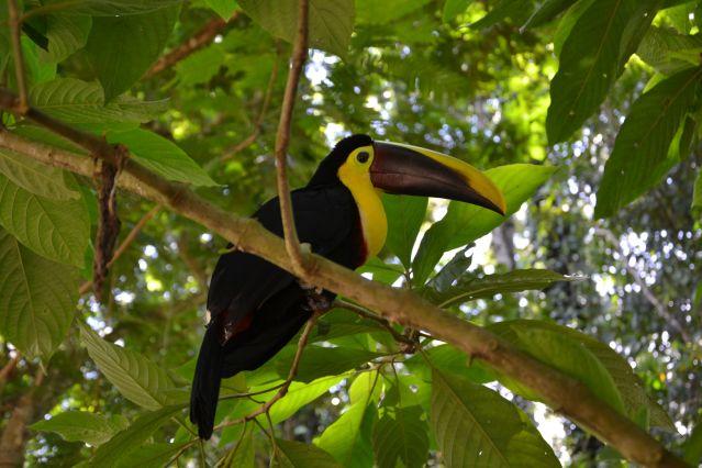 Voyage Cap sur le Corcovado, un nouvel Eldorado