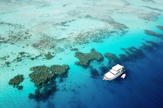 Mer Rouge, dauphins et récifs coralliens
