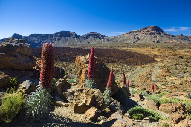 Parc national du Teide - Tenerife - Canaries