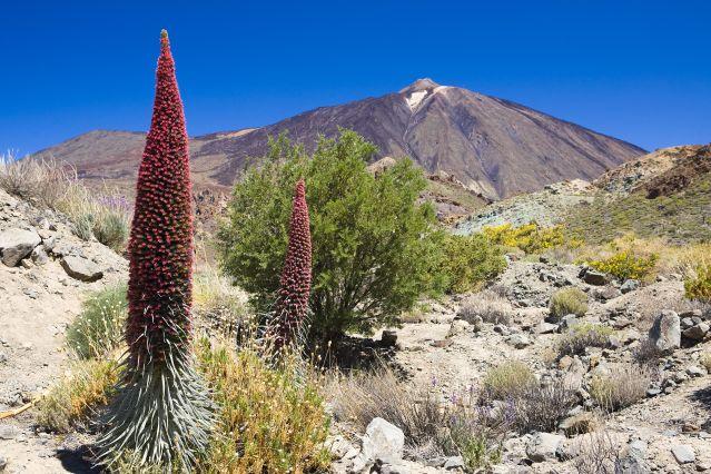 Parc national de Teide - Île des Canaries - Espagne
