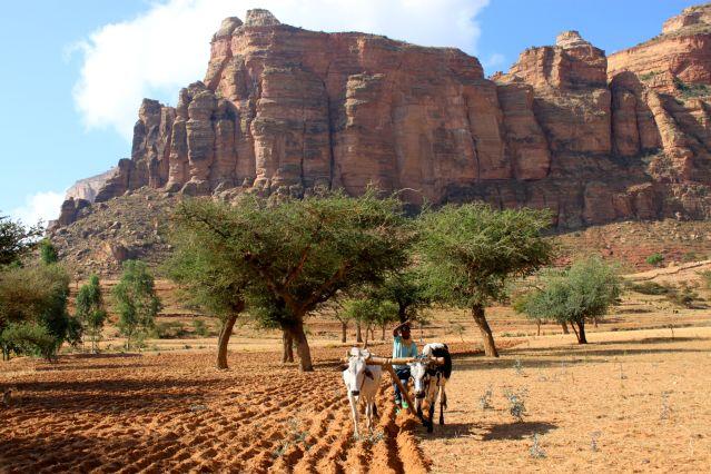 Champ - Tigré - Ethiopie