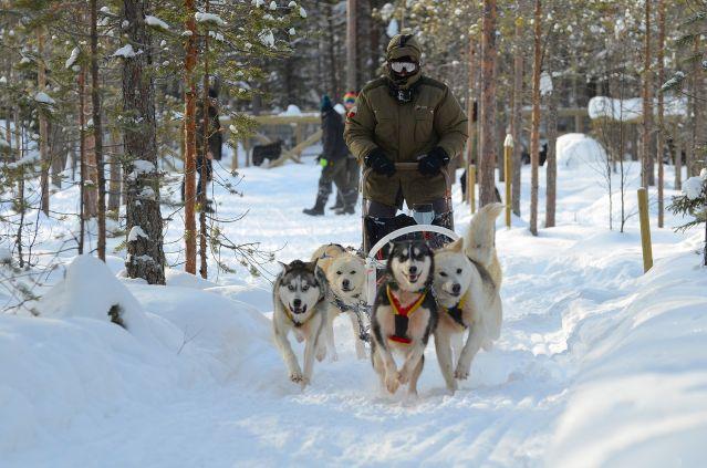 Découverte de la Laponie en traîneaux à chiens - Finlande