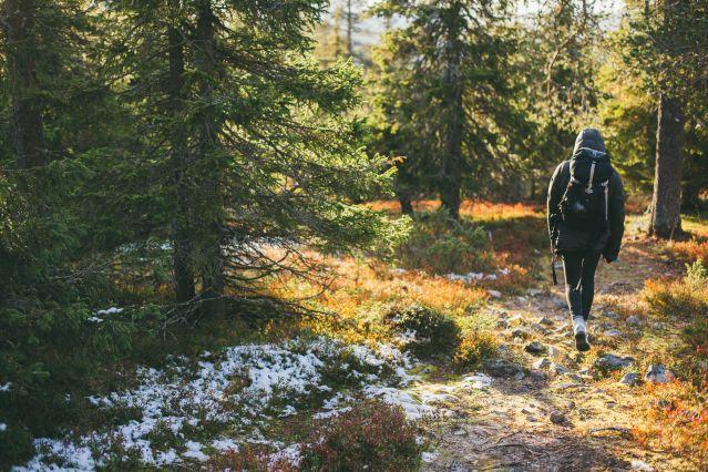 Randonneur dans le parc national de Pallas-Yllästunturi, Laponie
