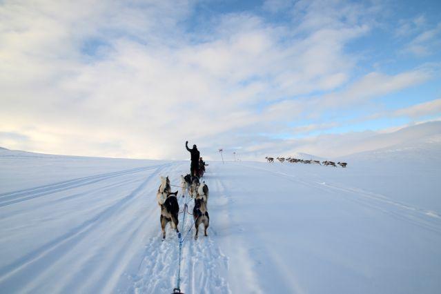 Voyage Traîneaux à chiens et aurores boréales