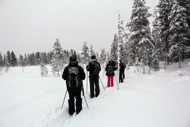 Randonnée à ski - Laponie - Finlande