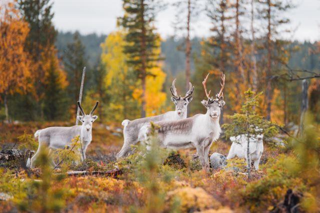 Voyage Eté indien et faune sauvage