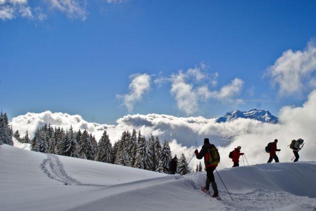 Raquettes sur le plateau de Beauregard - Bauges - Alpes du Nord - France