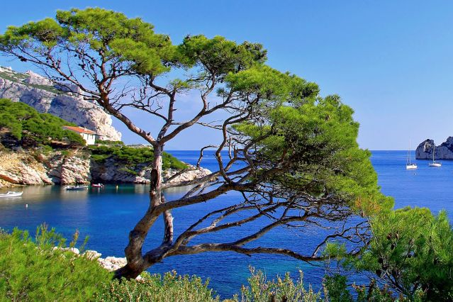 Calanques - Sormiou - Provence-Alpes-Côte d Azur - France