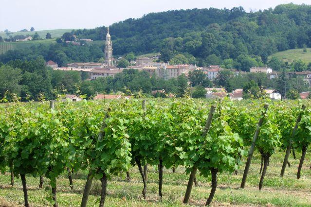 Vignes de l Entre-deux-Mers - Gironde - France - France