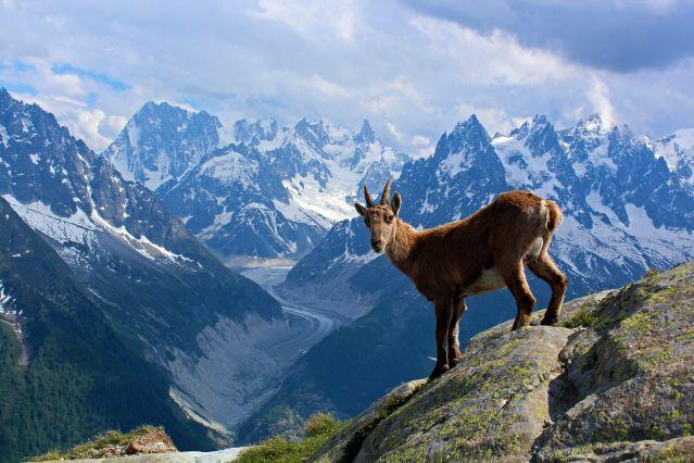 Voyage Grande Traversée des Alpes : lac Léman à Chamonix