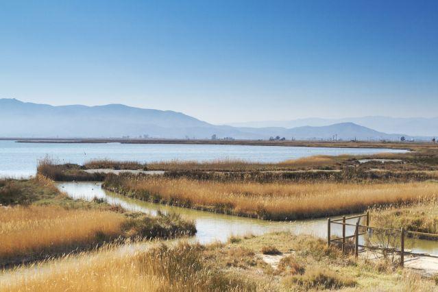 Parc naturel du delta de l Èbre - Tarragone - Catalogne - Espagne