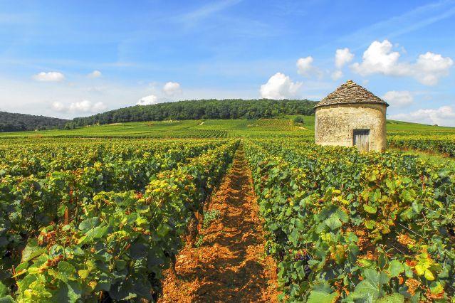 Canal de Bourgogne à vélo - Chemin de halage à vélo - 7 jours