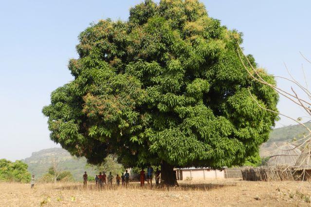 Voyage Trek en pays Soussou et contrefort du Fouta-Djalon