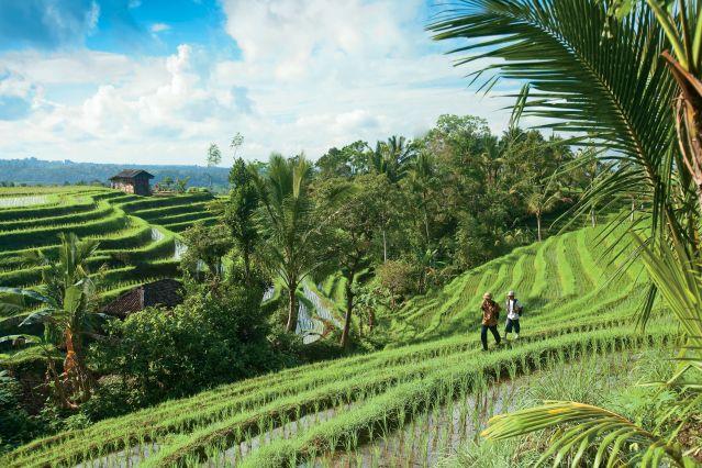 Des Volcans De Java Aux Rizi 232 Res De Bali Randonn 233 E Bali