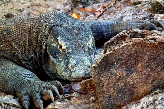 Voyage De Bornéo à Komodo : croisières en terres sauvages