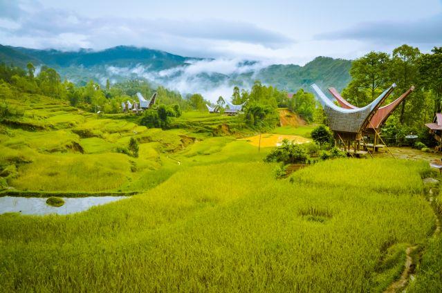 Toraja - Sulawesi - Indonésie