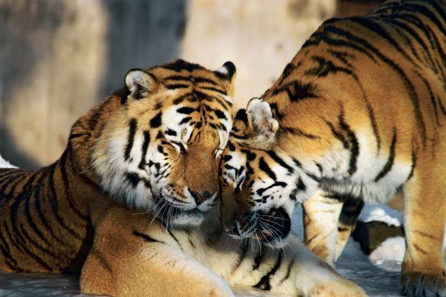 Voyage Tigres et maharajas