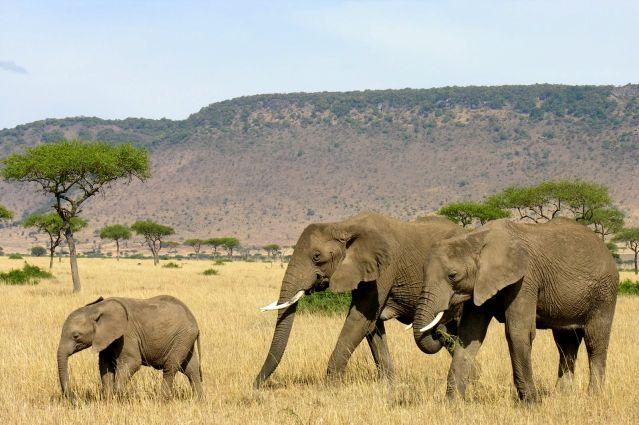 Réserve du Massai Mara - Kenya