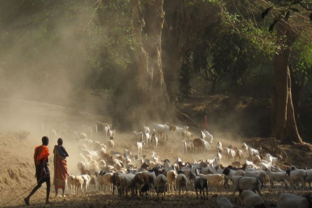 Voyage Safari à Masaï Mara et trek masaï