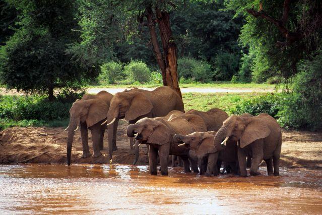 Voyage Kenya magique entre parcs nationaux et ranch privé