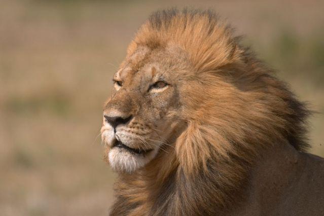 Réserve du Massai Mara - Vallée du Rift - Kenya