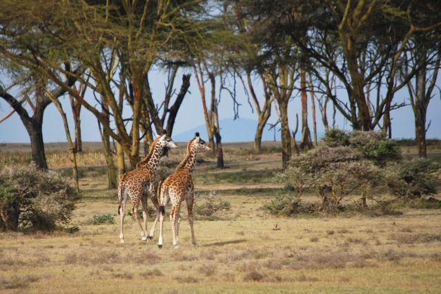 Réserve naturelle de la presqu île de Crescent island - Kenya