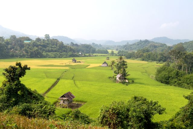 Rizières - Région de Nong Khiaw et Muang Ngoi - Laos