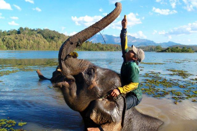 Centre de conversation des éléphants - Luang Prabang - Laos