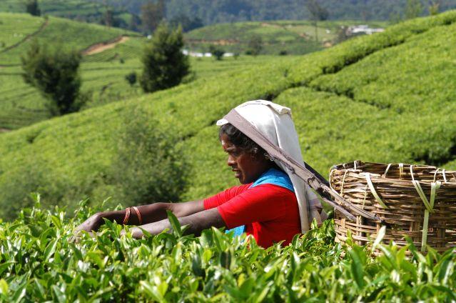 Sri Lanka Et Maldives Entre Culture Et Nature Voyage