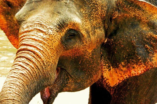 Voyage Aventures au pays des éléphants