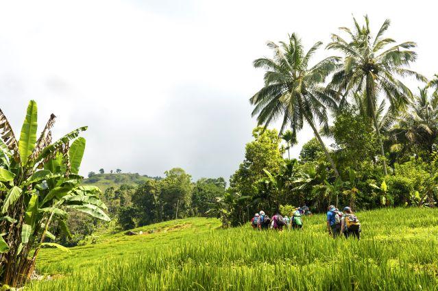 Randonnée dans les monts Knuckles - Sri Lanka