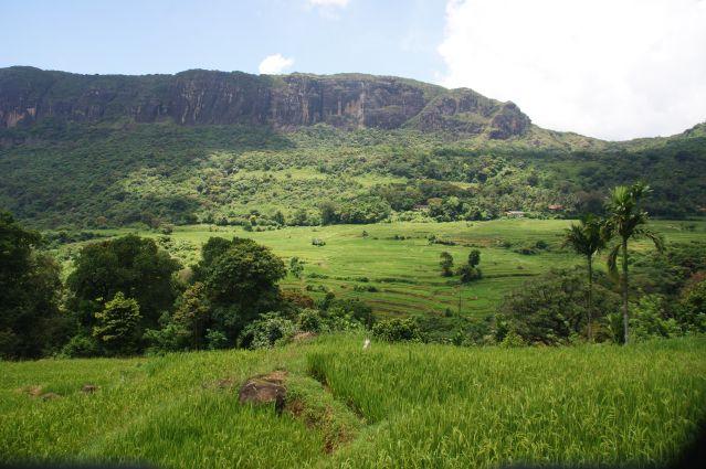 Monts Knuckles - Région Atanwila - Sri Lanka
