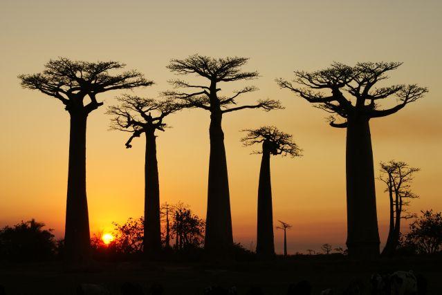 Voyage Grand tour de la Tsiribihina aux Pangalanes