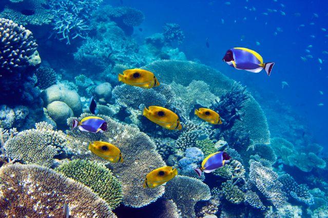Y at-il d'autres sites de rencontres libres comme beaucoup de poissons