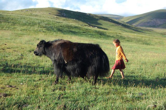 Dans les steppes du Khangaï - Mongolie