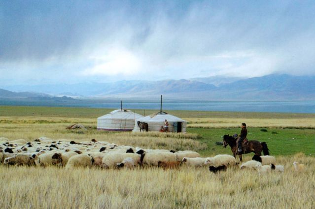 Campement - Mongolie