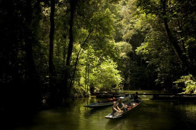 Parc National du Gunung Mulu - Borneo - Sarawak - Malaisie