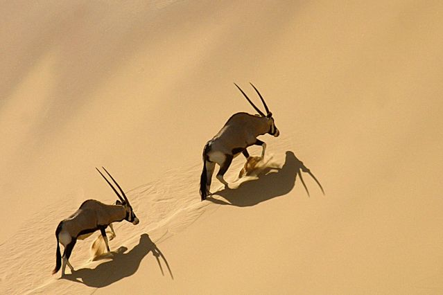 Voyage L'essentiel de la Namibie en lodge
