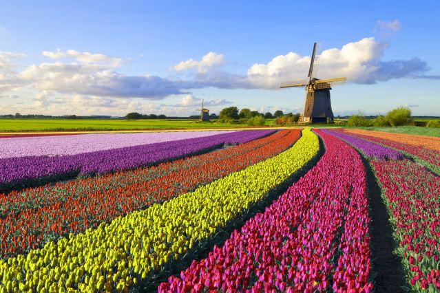 Vélo et péniche, les tulipes au fil de l'eau